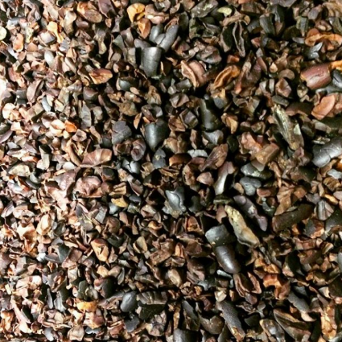 The Cacao Bean